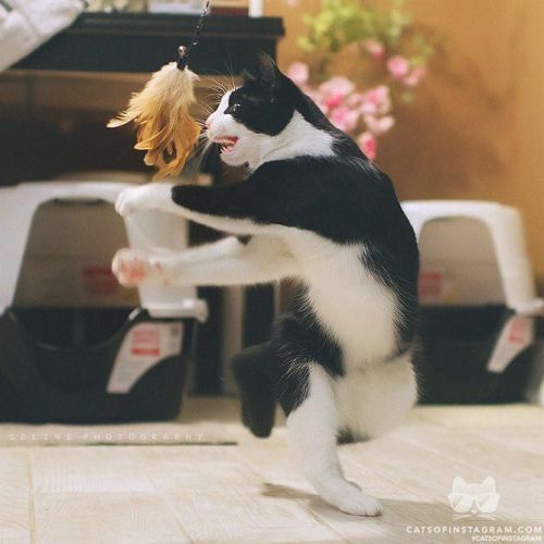 """catsofinstagram:  From @selinerr: """"Kung Fu LL, Again""""…"""