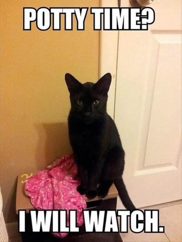 """25 Funny Animal Pictures Of The Day #funny explore Pinterest""""> #funny #picture ex..."""