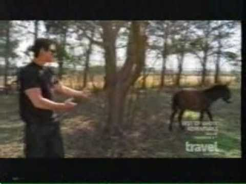 ghost adventures – hilarious donkey scene (+playlist) Can you imagine a donkey coming out…