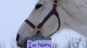 Hilarious Horse Shaming Photos That Will Put a Smile on Your Face