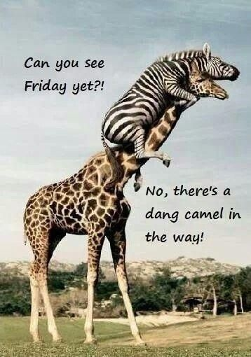 Hump Day Wednesday Quote Funny  Picture Quote #  #