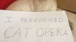 """I performed cat opera for the house at 4:30 AM."" My cat Angel does…"