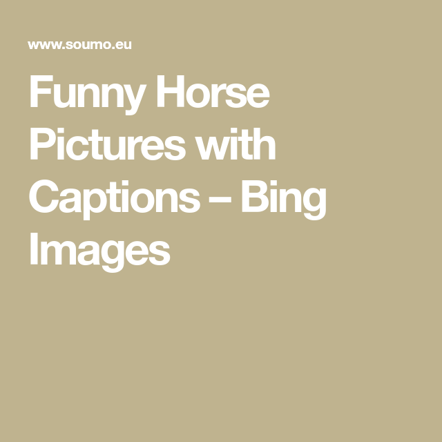 Funny Horse Pictures with Captions – Bing Images