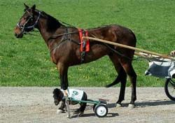 Funny Horse Pictures with Captions | Funny Horse Pictures With Captions Funny horse pictur...