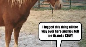 "Funny Horse Pictures With Captions # search Pinterest""> #"