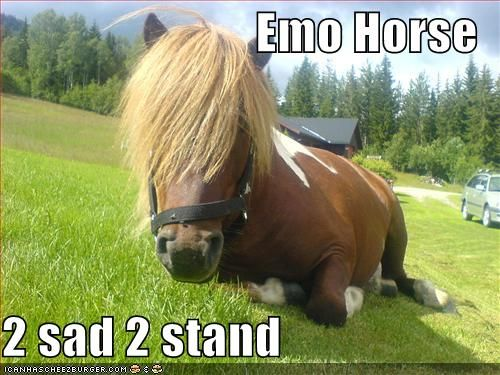 Funny Horse Pictures with Captions | funny pictures of horses,Funny horse photos and funnier…