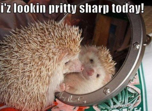 funny animal pictures with captions | … Funny captions make cute photos better (…