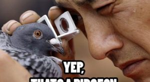 funny pictures with captions   … caption are just priceless a compilation of hilario...