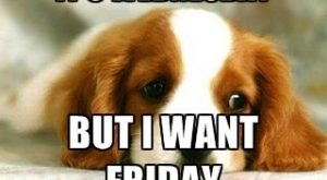 It's Wednesday But I Want Friday Sad Puppy Meme Generator, Its