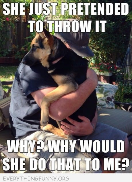 funny caption german sheperd she just pretended to throw it why would she do…