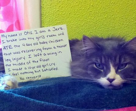 Funny Pictures Of Public Cat Shaming