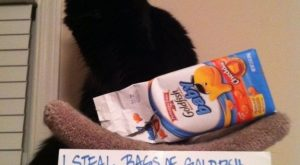 Cat-Shaming At Its Best (I agree, Goldfish are so goood!)