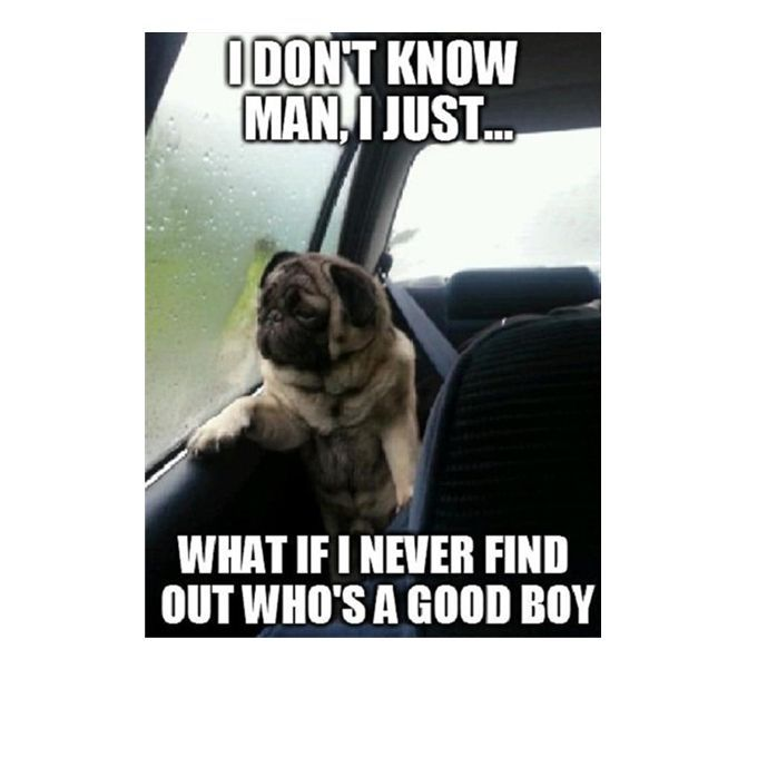funny dog memes that feature a picture of a pooch and a funny…