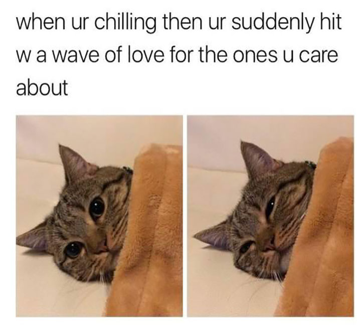 Funny Cat Memes That Will Cure Your Bad Day