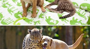 animals that have been friends forever