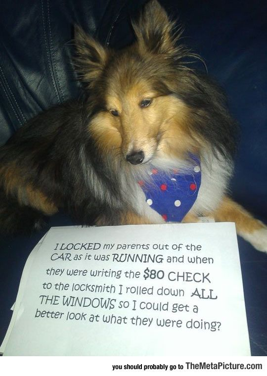Best Case Of Dog Shaming – Tap the pin for the most adorable pawtastic…