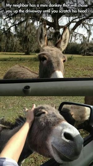 Have Some Laughs With These Donkey Memes