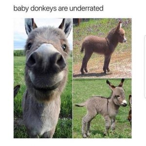 Have Some Laughs With These Donkey Memes –