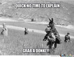 Have Some Laughs With These Donkey Memes | CutesyPooh