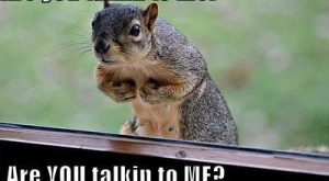 #humor  #humor #squirrel  #squirrel #fun  #fun #memes explore…