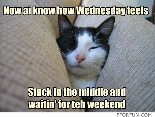 Image result for Cute memes about Wednesday