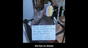 "Cat shaming #1 explore Pinterest""> #1 – Compilation"