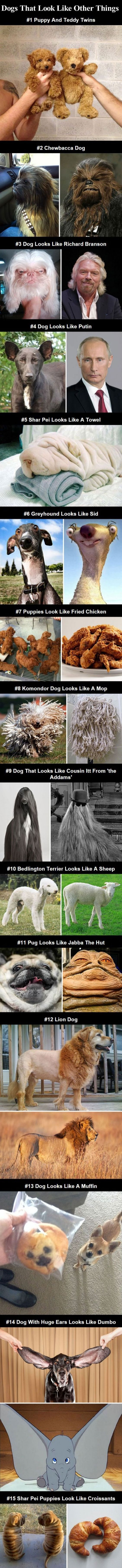 Dogs That Look Like Other Things cute animals dogs adorable dog puppy animal pets…