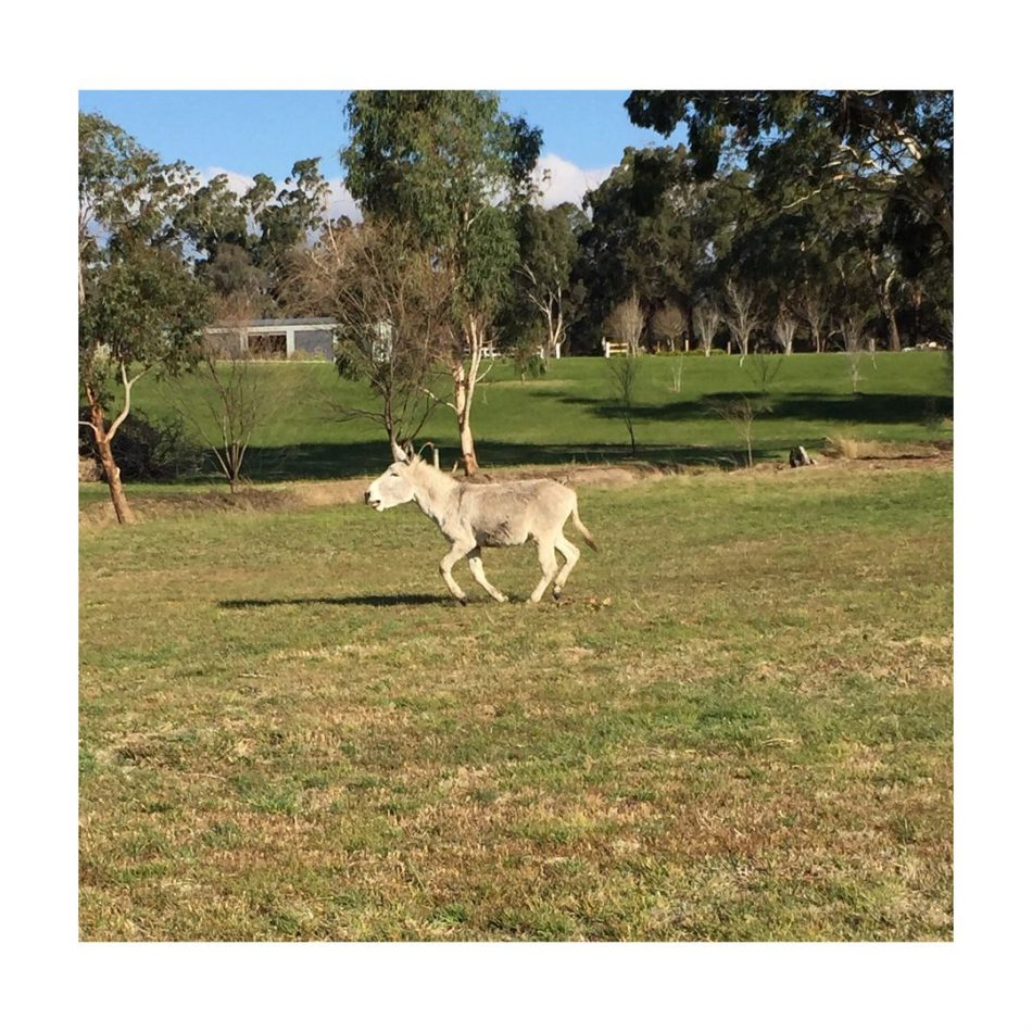 Donkey-Gate . We woke this morning to find a donkey had come into our…