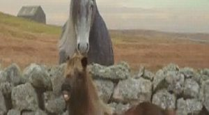 As Soon As The Farmer Leaves, The Pony Starts Dancing! Hilarious! (VIDEO) #pony explore…