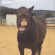Woman goes to ask horse yes or no questions, horse hilariously tries responding