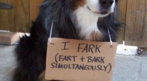 dog_shaming_AAB