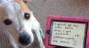 dog_shaming_AAI