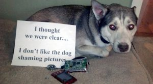 dog_shaming_AAL