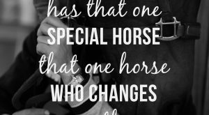 Every rider has that one special horse that one horse who changes everything about…