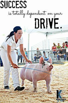 show pig quotes – Google Search