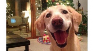 This dog's expression that captures the excitement of holidays: 21 Dog Memes That Will…