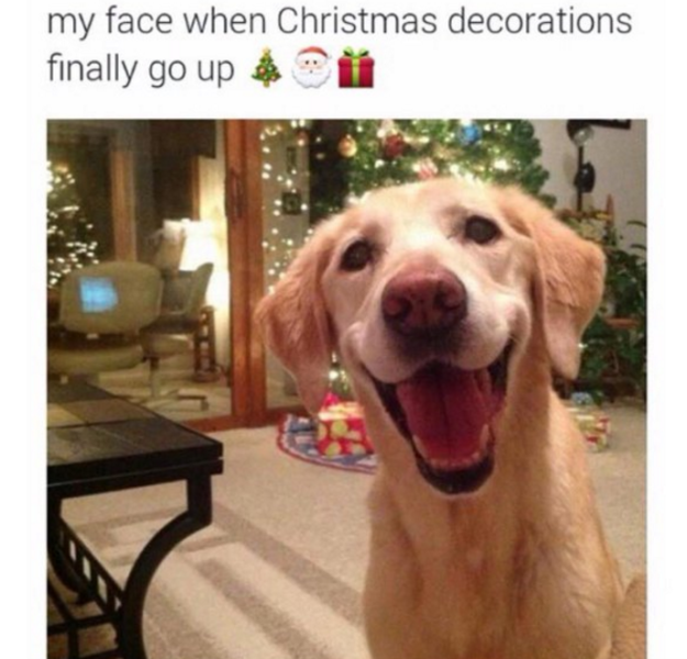 This dog's expression that captures the excitement of holidays: | 21 Dog Memes That…