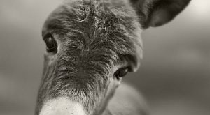 ↑↑TAP AND GET THE FREE APP! Art Creative Funny Animals Donkey Black White HD…