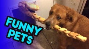 FUNNY PETS AND ANIMALS | Cute Aww Pets Failing and BEING CUTE!