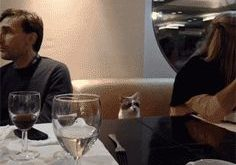 The Greatest GIFs of