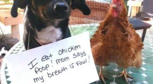 hilarious-dog-shaming-photos-ever_2
