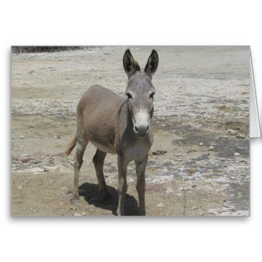 Birthday card, Jackass, donkey, funny, humor, joke