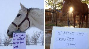 Clearly these horses just couldn't help their naughty behavior, and these horse shaming…