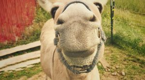 Who can resist such a sweet smile? #donkeys  #donkeys #farmanimals …