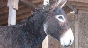 Image result for Donkey backsides