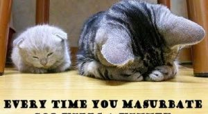 funny cat pictures with captions | … cats, cute cats pictures, funny cat caption…