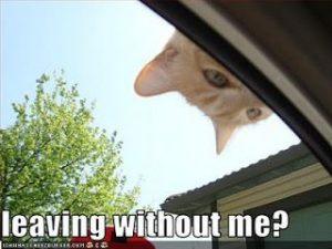 Funny photos of cats, cute cats pictures, funny cat caption pictures – Funny Picture...
