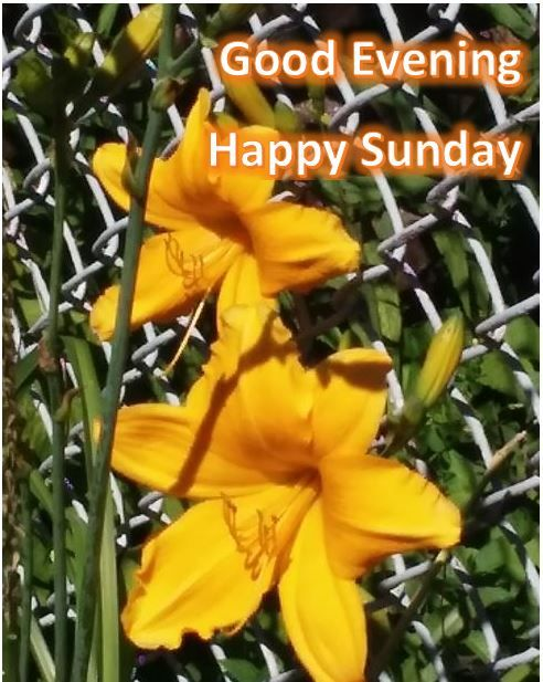 Greetings for your weekends
