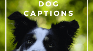 Here, I've collected some of the most beautifuldogcaptions for your Instagram pictures that will…