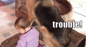 dogs with captions for 2013 | funny dog caption picture it's your fault we're…